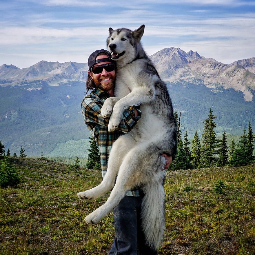 Loki-the-Wolfdog3__880