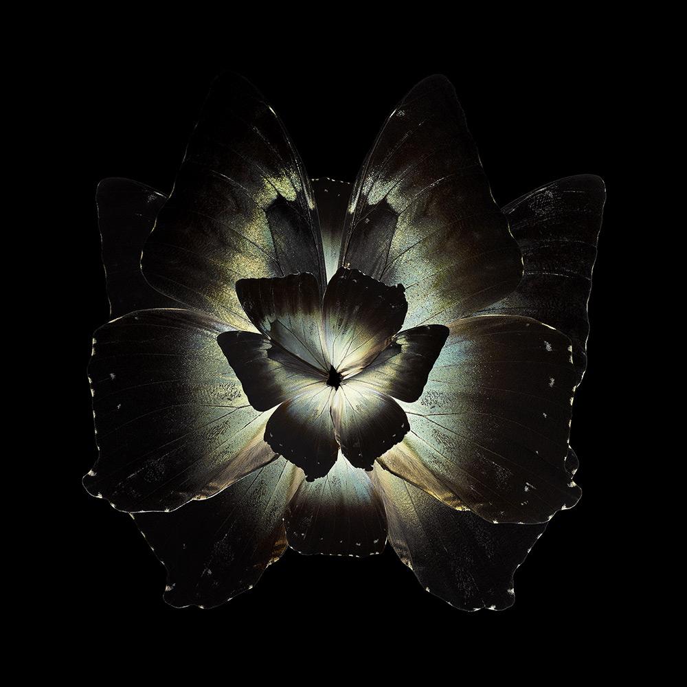 cvety-iz-krylyev-babochek-ot-seb-janiak-etoday-002