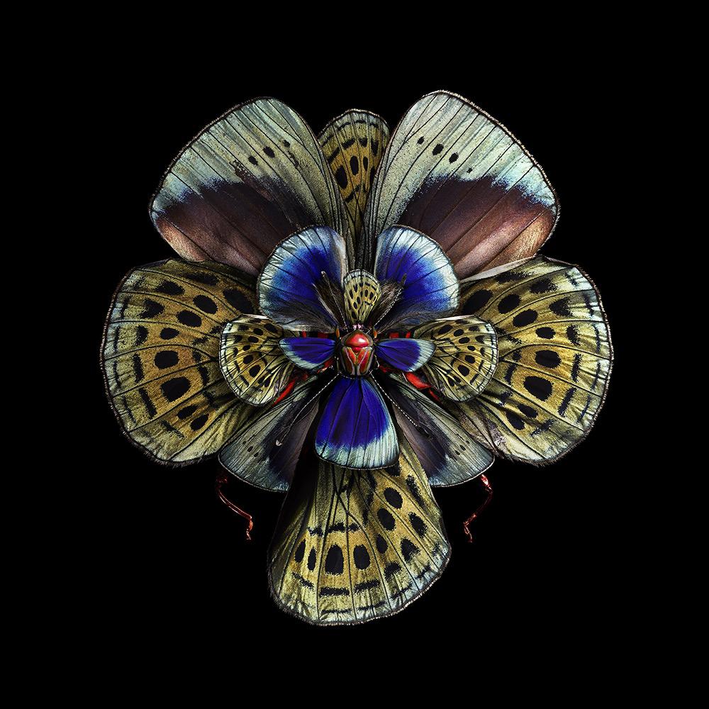 cvety-iz-krylyev-babochek-ot-seb-janiak-etoday-003