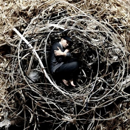 Do hnízda
