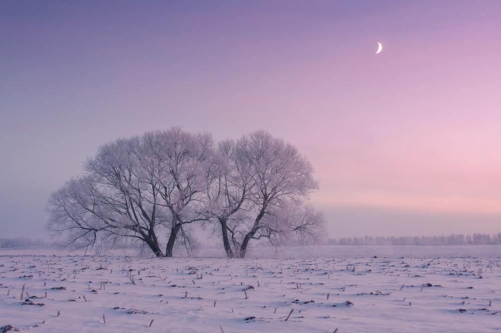 winterbeauty05
