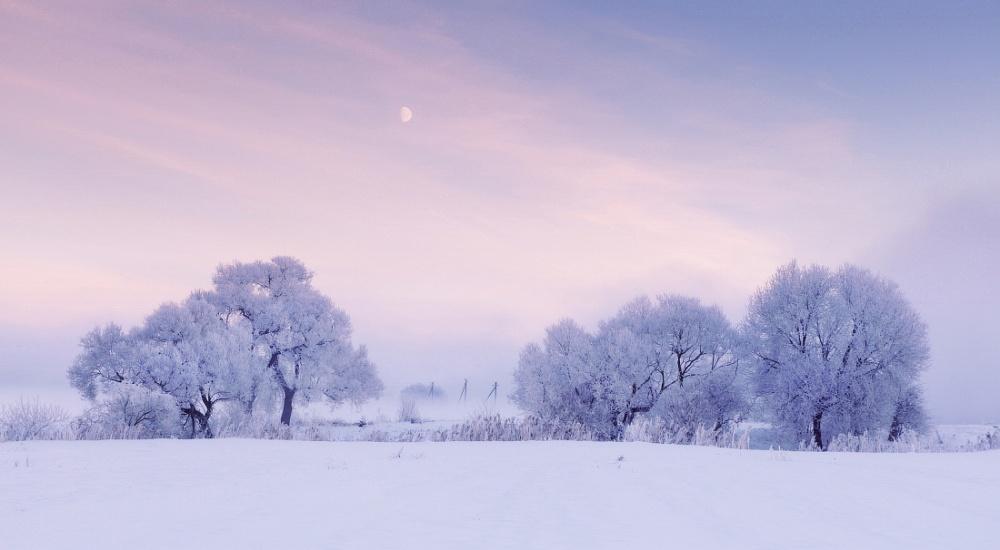 winterbeauty09