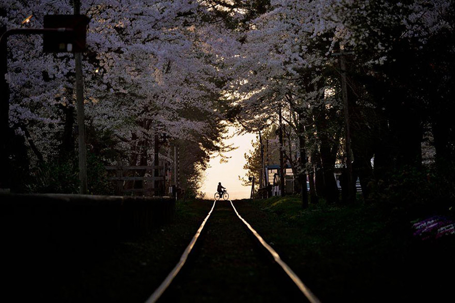 spring-colors-japan-cherry-blossoms-national-geographic-3