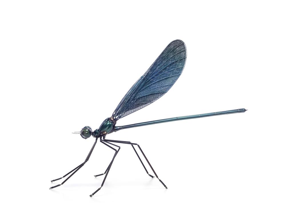 12.Dragonfly