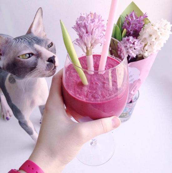 kočka s drinkem