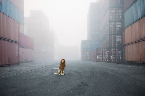 stray-dog-big-city-lion-grossstadtlowe-julia-marie-werner-1