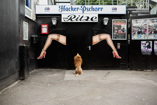 stray-dog-big-city-lion-grossstadtlowe-julia-marie-werner-4
