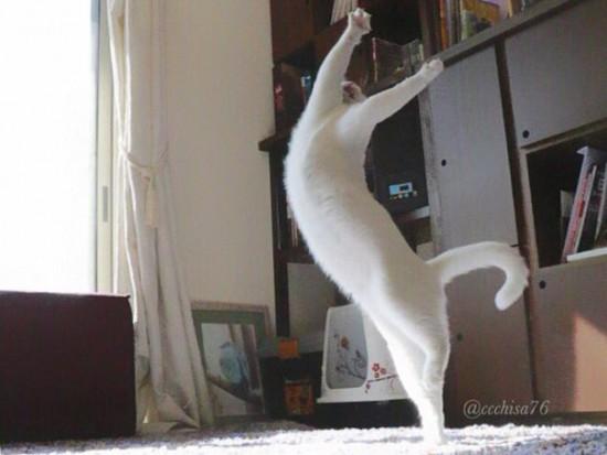 ballet-cat-japan-13