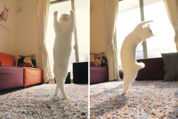 ballet-cat-japan-coverimage2