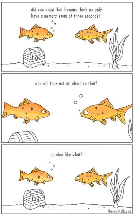 funny-animal-comics-they-can-talk-jimmy-craig-29-57469fb09e2af__605