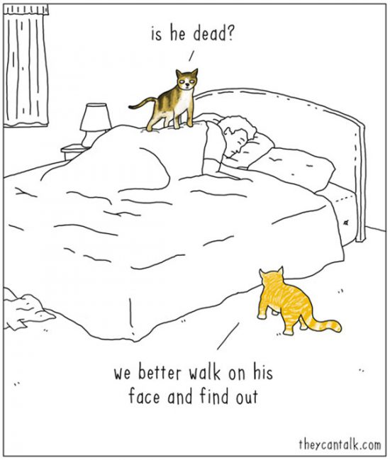 funny-animal-comics-they-can-talk-jimmy-craig-4-57469f7456097__605
