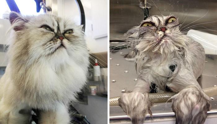 Mazlíčci před a po koupeli