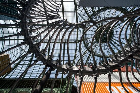 monumenta-huang-yong-ping-grand-palais-paris-designboom-05