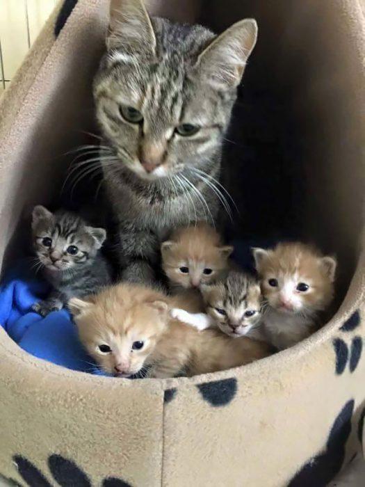 funny-animal-motherhood-photos-cats-dogs-pet-moms-1-5767d69d9d84e__605