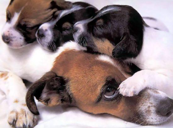 funny-animal-motherhood-photos-cats-dogs-pet-moms-12-5767d6bbb2a21__605
