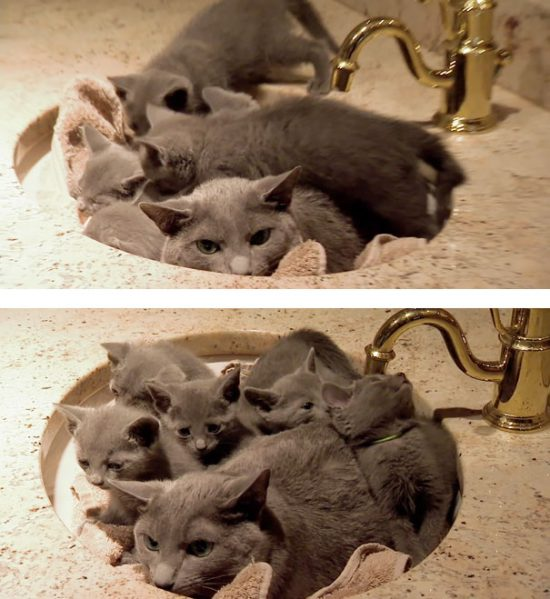 funny-animal-motherhood-photos-cats-dogs-pet-moms-17-5767ded9cae95__605