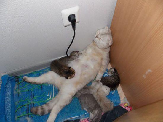 funny-animal-motherhood-photos-cats-dogs-pet-moms-20-5767e694ac1e8__605