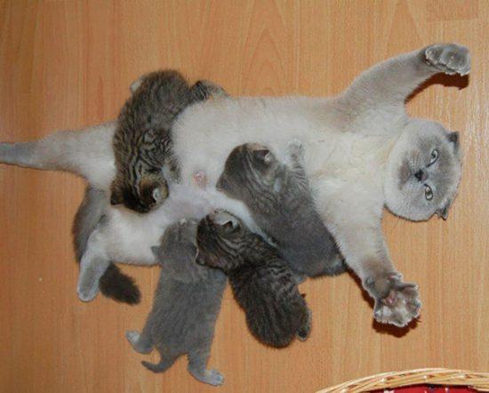 funny-animal-motherhood-photos-cats-dogs-pet-moms-4-5767d6a69d572__605