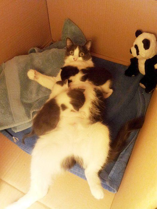 funny-animal-motherhood-photos-cats-dogs-pet-moms-8-5767d6b109d16__605