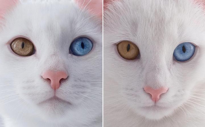 TwinCats1