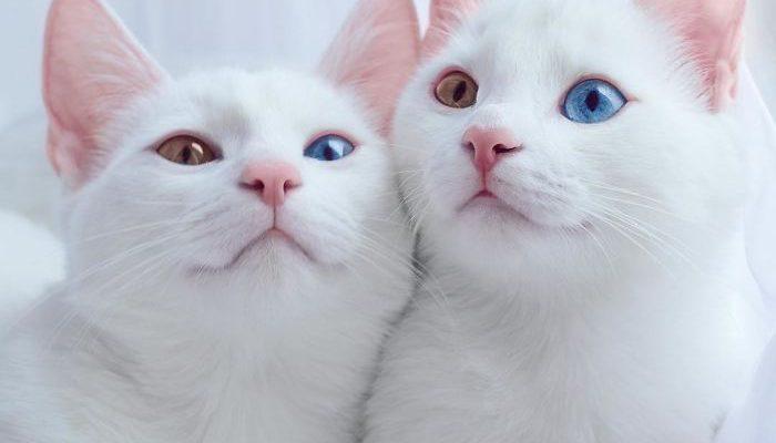 TwinCats4