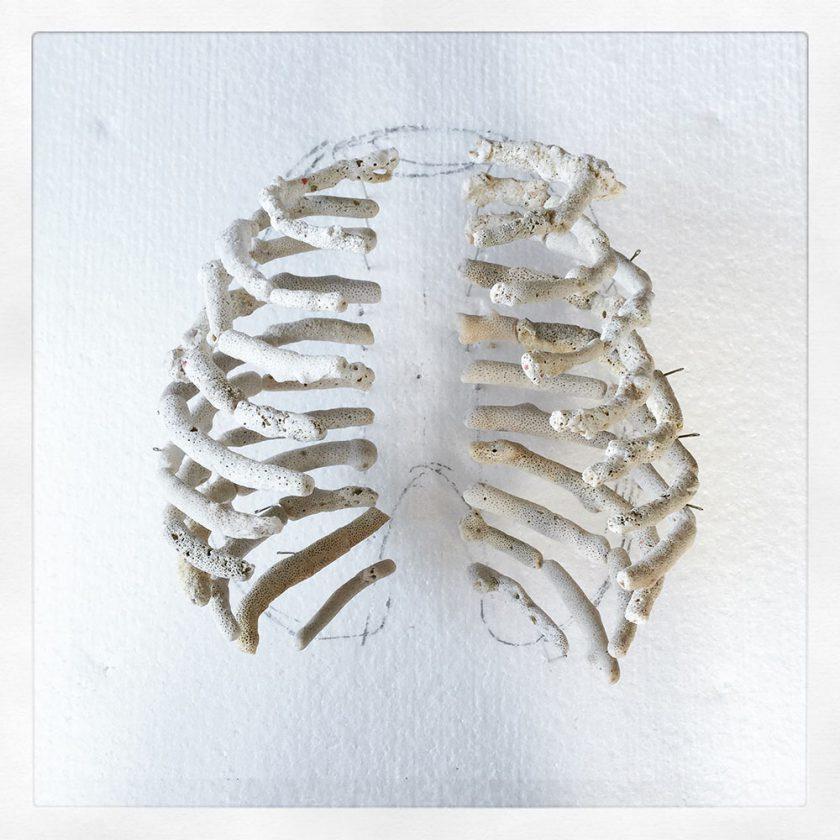 corail-squelette-03-840x840