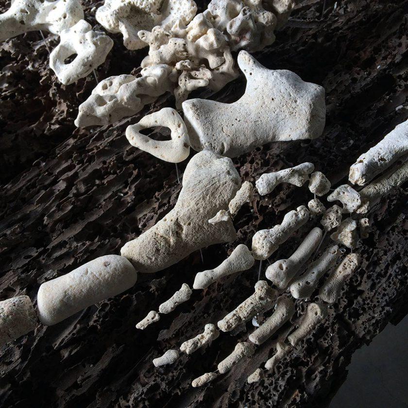 corail-squelette-04-840x840