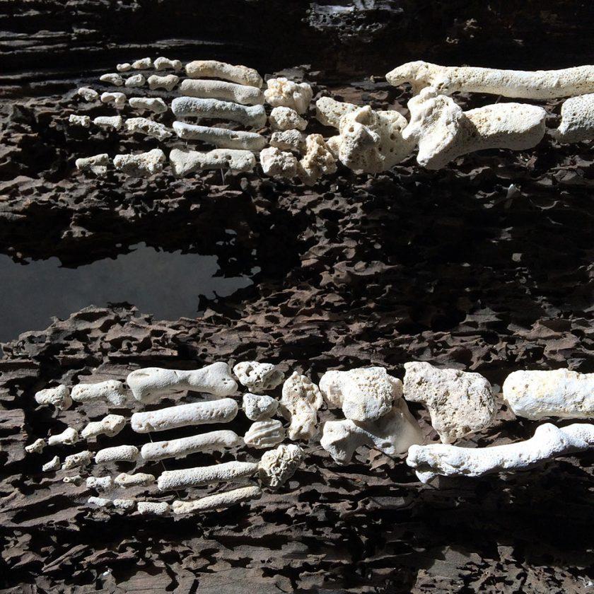 corail-squelette-05-840x840