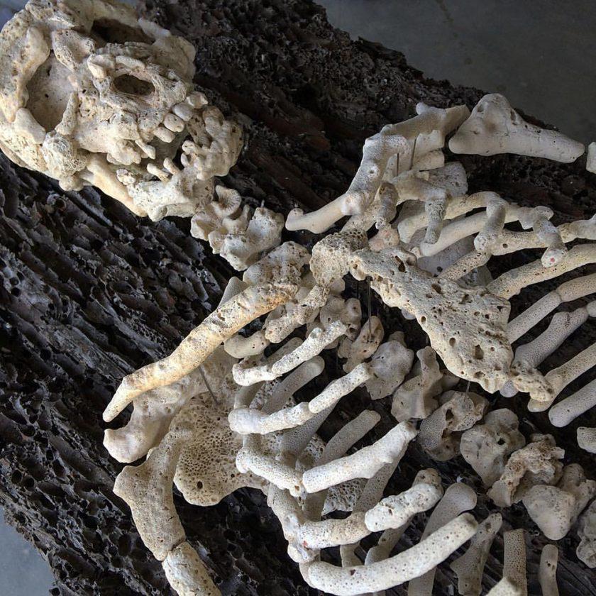 corail-squelette-06-840x840