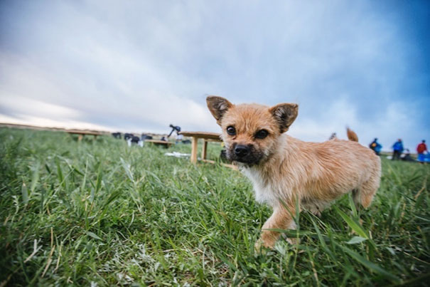 stray-dog-joins-race-gobi-dion-leonard-china-12