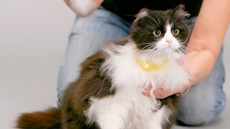catterbox-cat-collar-5