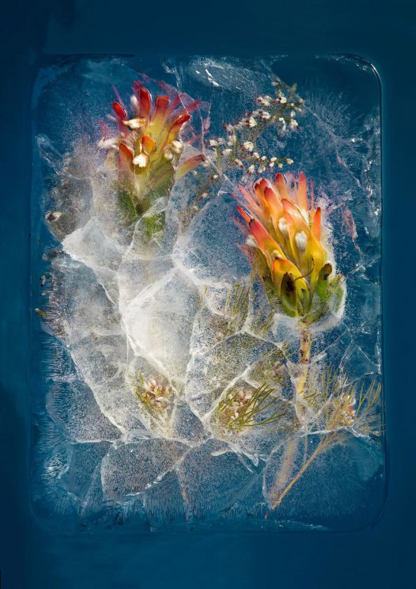 compositions-florales-glace-01-593x840