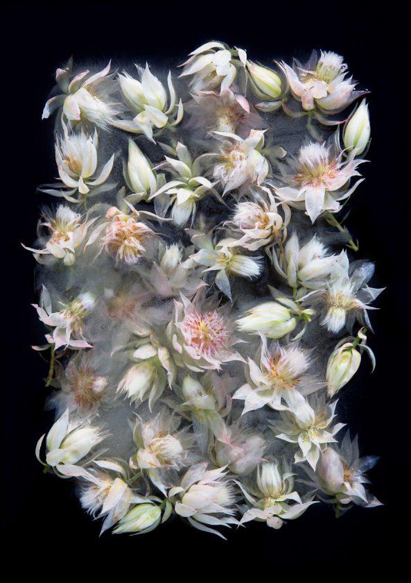 compositions-florales-glace-02-593x840