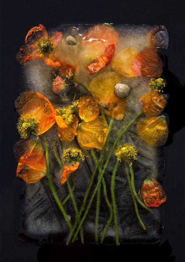 compositions-florales-glace-03-593x840