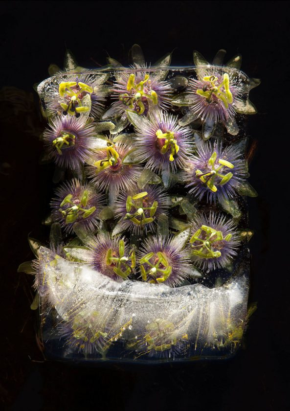 compositions-florales-glace-04-593x840