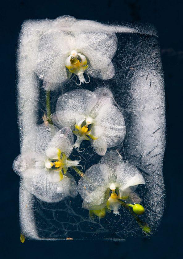 compositions-florales-glace-06-593x840