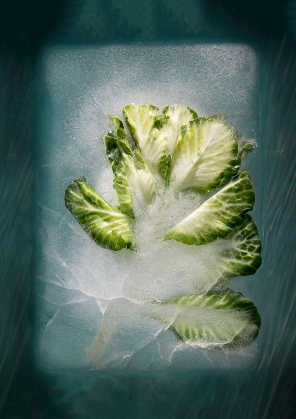 compositions-florales-glace-10-593x840