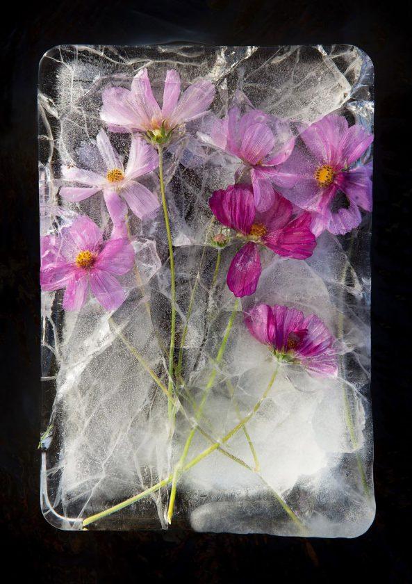 compositions-florales-glace-11-593x840