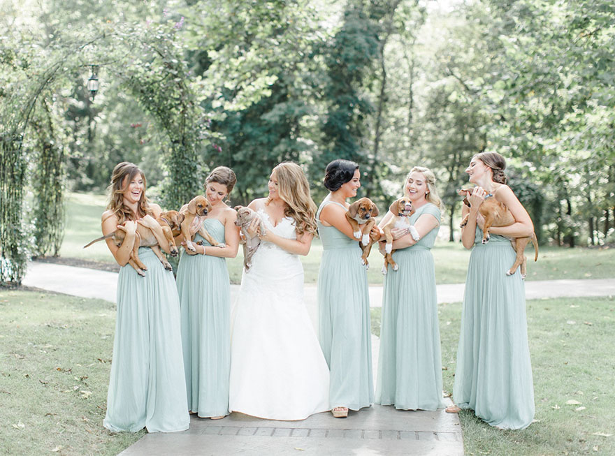 wedding-puppies-instead-flowers-pensylvannia-1