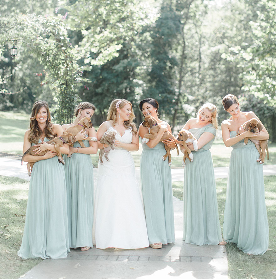 wedding-puppies-instead-flowers-pensylvannia-4