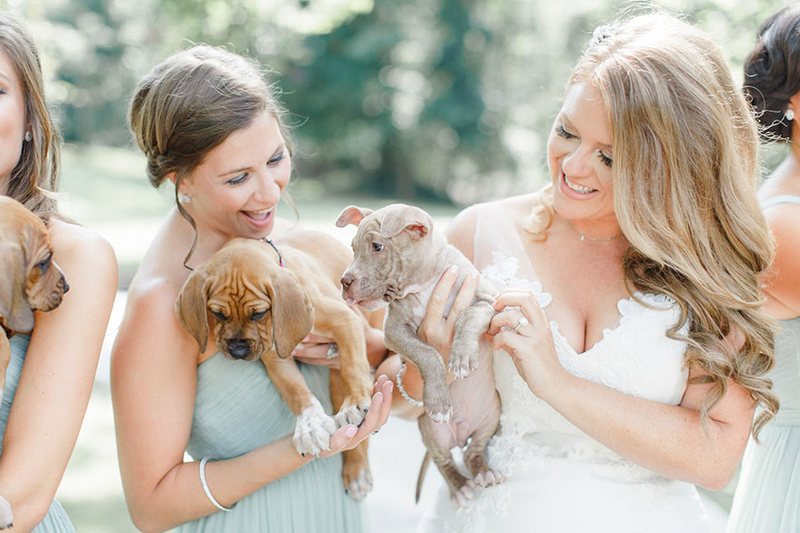 wedding-puppies-instead-flowers-pensylvannia-5