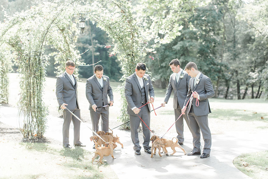 wedding-puppies-instead-flowers-pensylvannia-7