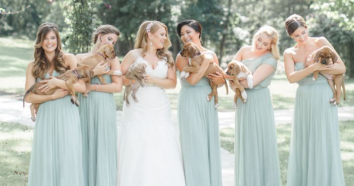 wedding-puppies-instead-flowers-pensylvannia-fb__700-png