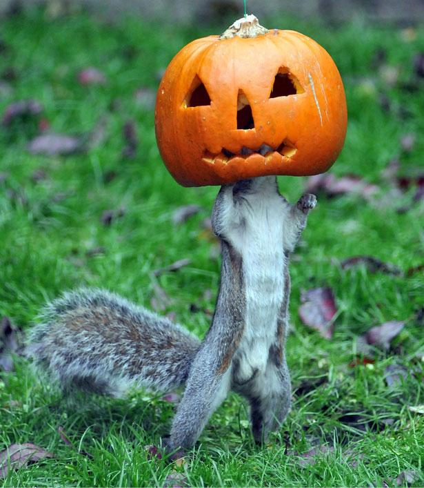 squirrel-main