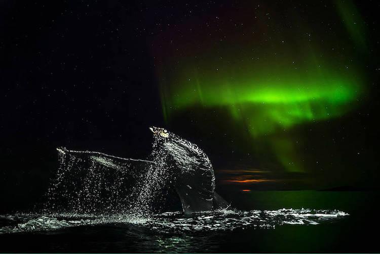 audunrikardsenwhales803