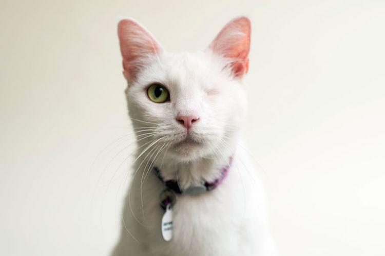 blindcats10
