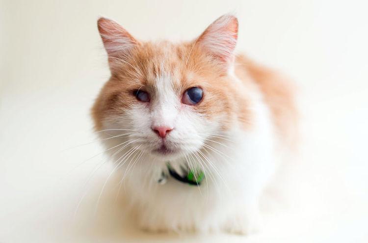 blindcats3