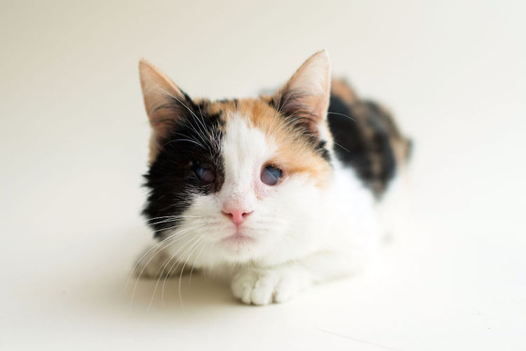 blindcats8