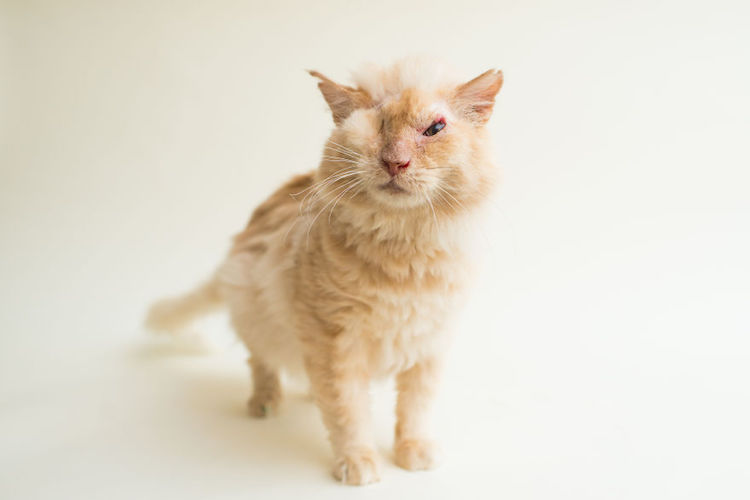 blindcats9