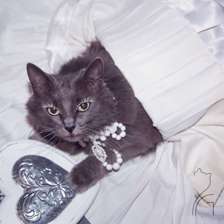 pitzush-puss-in-glam-4